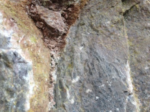 Coral fossils from the Carboniferous period