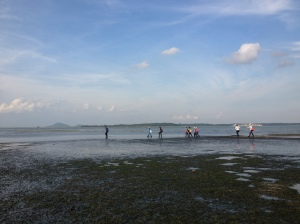Chek Jawa - immensely grateful for those who managed to get it saved from development for us