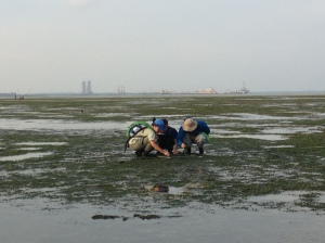 Seagrass monitoring in progress
