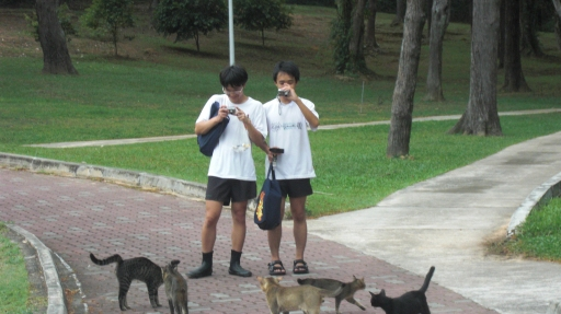 Samuel Tan & Abel Ang photographing the cats of St John's Island