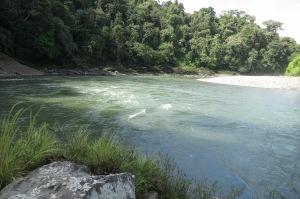 Rapids in river Pini Pini