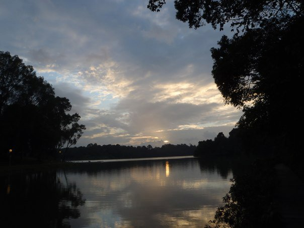 Macritchie reservoir 2011