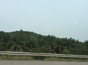 Oil palms lining the expressways