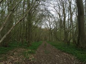 Hayley Wood - ancient woodland