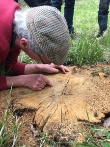 Actually counting tree rings; the tree was more than 100 years old.