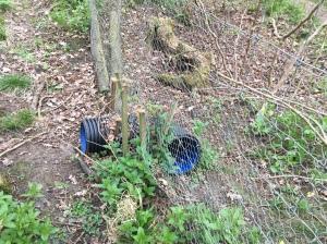 Badger tunnel! Keeps out deer (invasive muntjac)