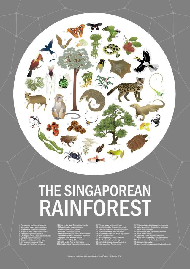 Singapore rainforest biodiversity-Loy Xing Wen